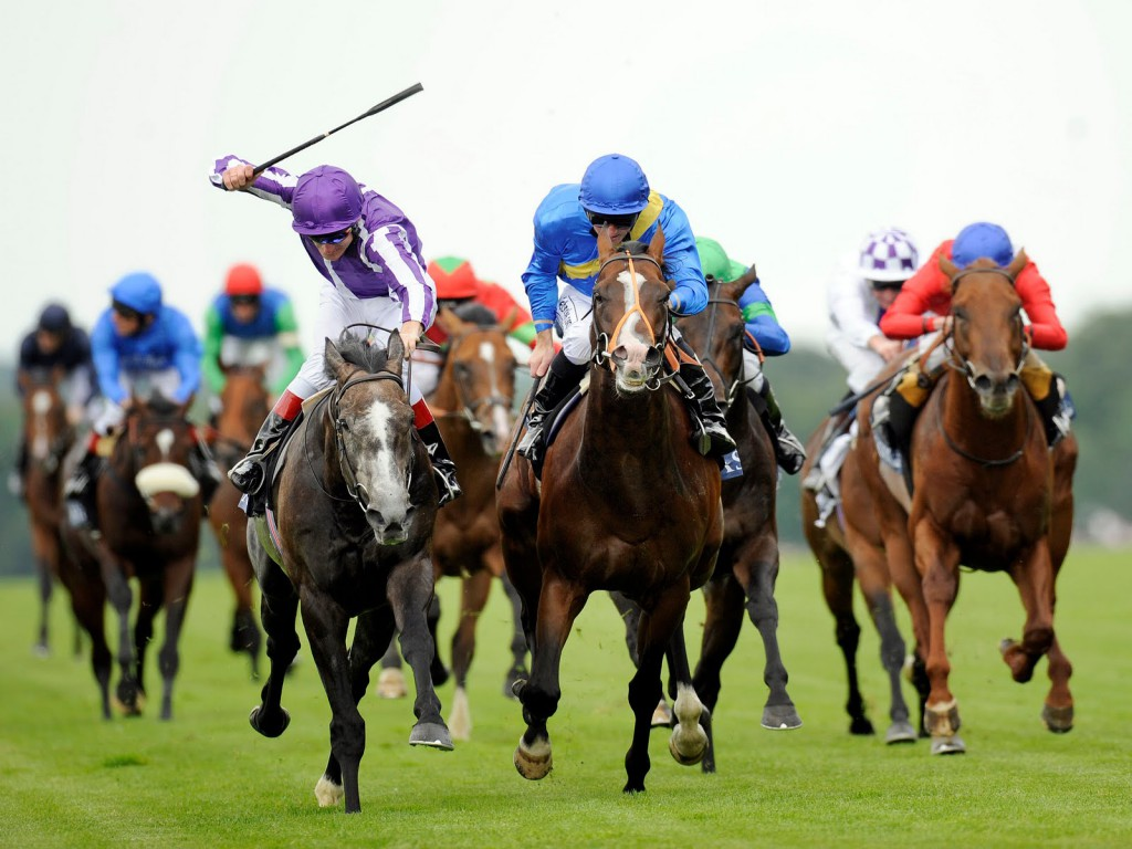 Looking For Horse Syndicates For Horse Racing
